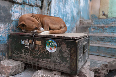 Dog spending a cold winter night atop a crate in Jodhpur, Rajasthan, India
