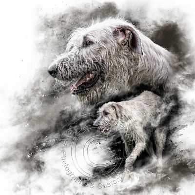 Art-Digital-Alain-Thimmesch-Chien-95