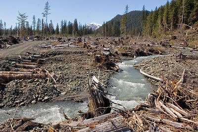 Logging of old-growth forest near a riparian arera on public lands in the Chugach National Forest, Alaska