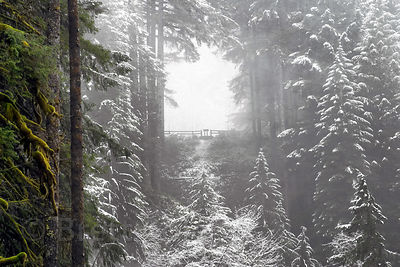A wintery scene in Silver Falls State Park, Oregon. Eight major falls dot the canyon. This view captures the distant viewpoin...