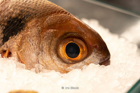 A closeup of a fish at L'olive restaurant in Barcelona, Spain