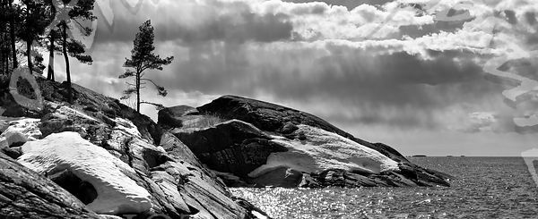 Lone_tree_on_seaside_snowy_rocks