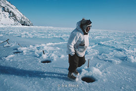 On Little Diomede, hunters crabbing through holes in the ice for Alaska King Crab