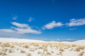 Plant Pioneering Dunes in White Sands National Monument