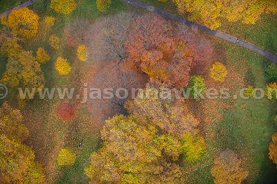 Aerial view over autumn trees, Hyde Park