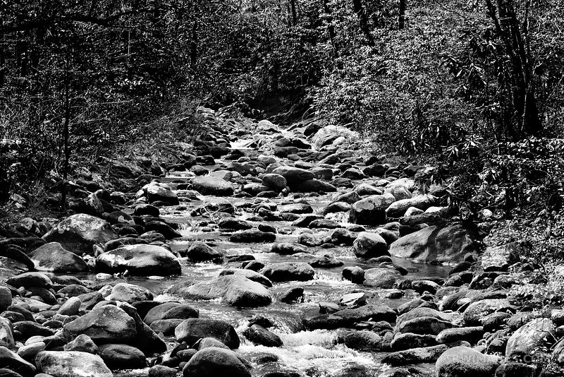 FOREST STREAM SMOKY MOUNTAINS BLACK AND WHITE