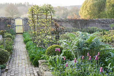 Brick paths in the kitchen garden pass bed full of new silvery foliage of cardoons, self seeded forget-me-nots, clipped box a...