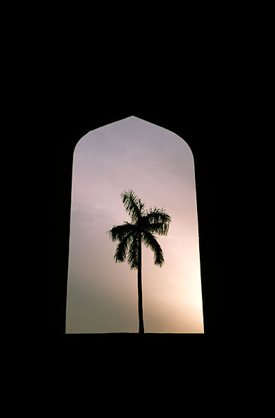 A tree seen through  an arch at the Jantar Mantar