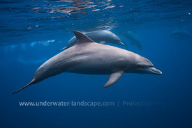 Dolphin picture in Mayotte island