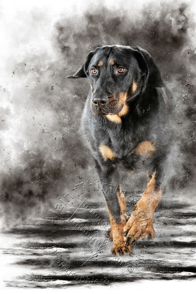 Art-Digital-Alain-Thimmesch-Chien-670