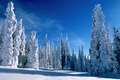 Yellowstone_2_Top_snow_covered_trees