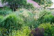 Central, circular bed planted with a mix of grasses and perennials including Bupleurum falcatum, Sedum 'Purple Emperor', Echi...