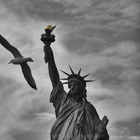 New_york_mouette_survol_statue_liberte_splash_BNW