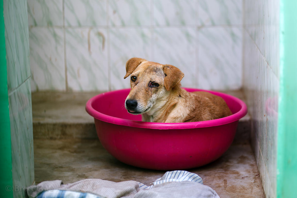 A dog rests in a plastic bin in its kennel space at the Tree of Life for Animals rescue center in Pushkar, India (tolfa.org.uk)