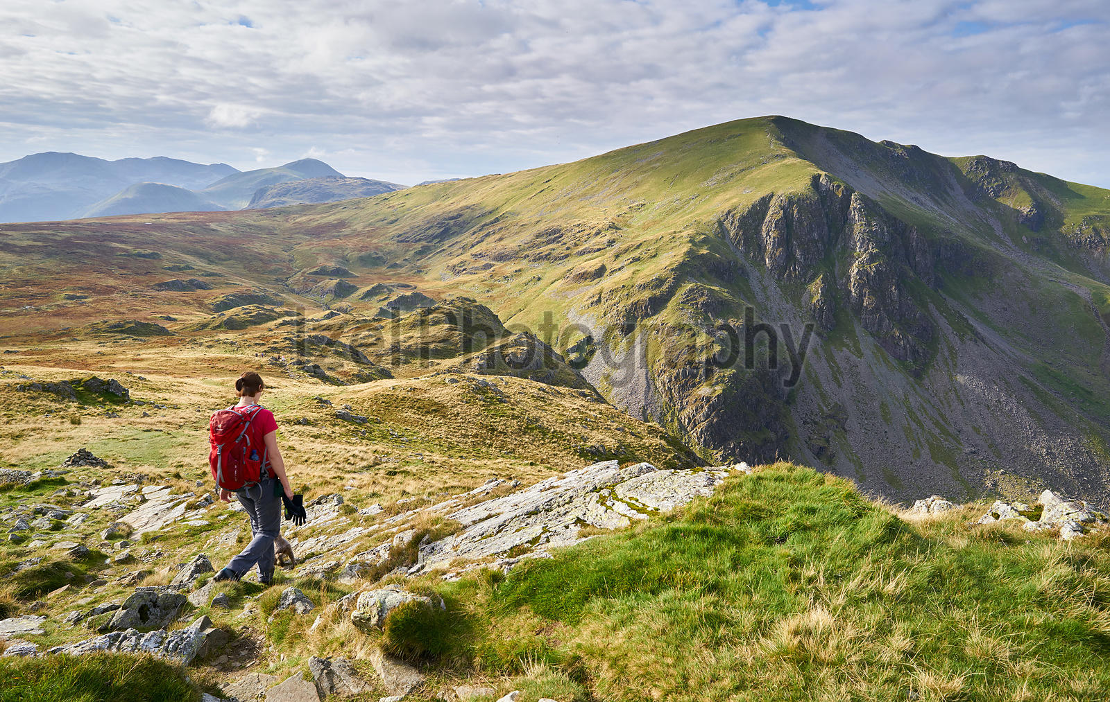 A hiker descending from High Spy towards the summit of Dale Head in the Lake District, England, UK.