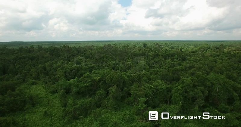 Palm Tree Plantation to Jungle Transitions. Drone Video Central Kalimantan, Indonesia