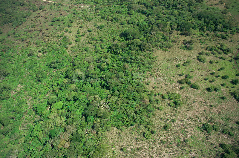 Aerial view of regenerating tropical dry forest, Santa Rosa NP, Costa Rica