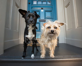 Two small dogs with funny expressions on a porch