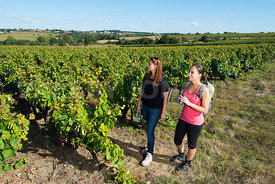 photo: randonnee vignoble