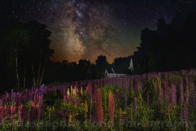 Milky Way Over Lupine Fields II
