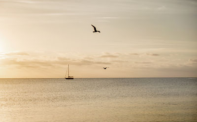 View of the sea with sailing boat and sea gulls
