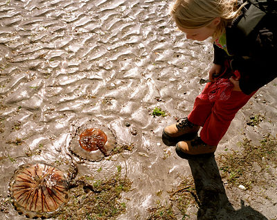 Girl examining beached jellyfish in sand