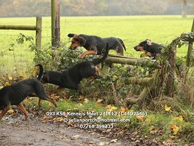 093_KSB_Kennels_Meet_241113_(C44O2546)