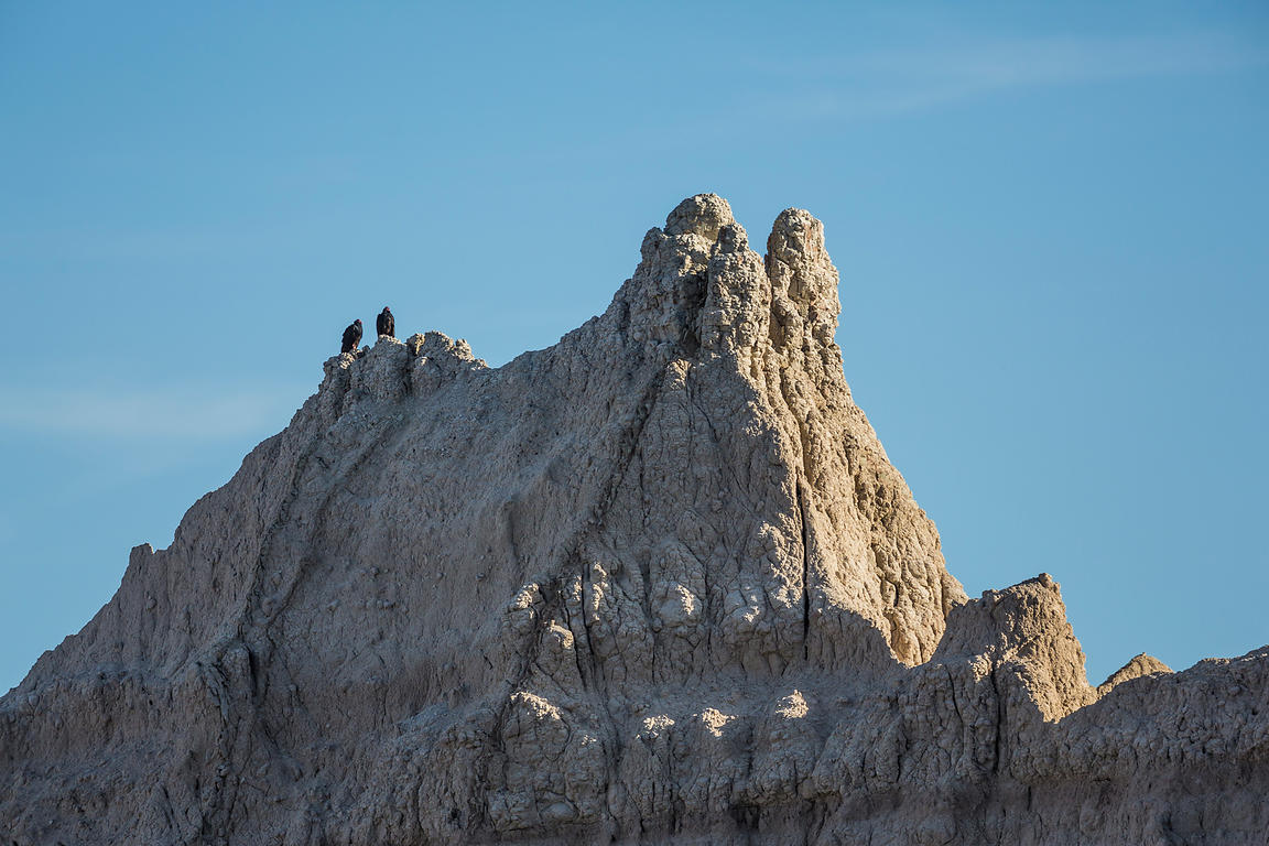 Turkey Vultures Perched on Rock Formation in Badlands National Park