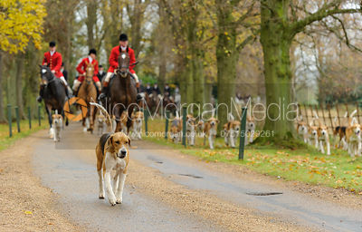 John Holliday and hounds arrive at Scalford Hall - The Belvoir Hunt at Scalford Hall 16-11-13
