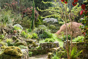 The garden around the house is shaped by paths and stonework planted with a rich mix of shrubs, trees and perennials includin...