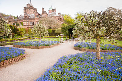 Pollarded silver pears in the Summer Garden are underplanted with vivid blue forget-me-nots. Holker Hall, Grange over Sands, ...