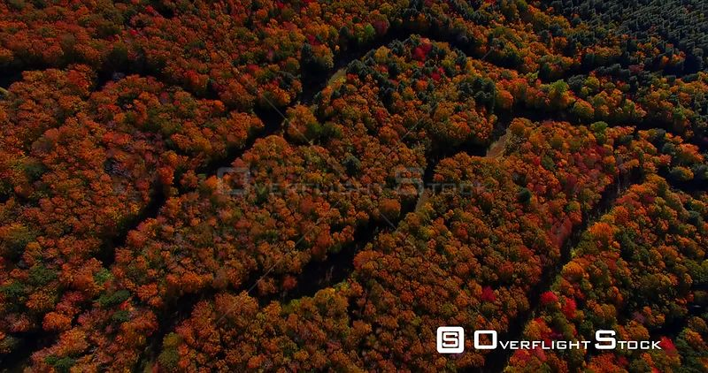 Nova Scotia Canada Fall Colors Leaves Forrest Wentworth Valley
