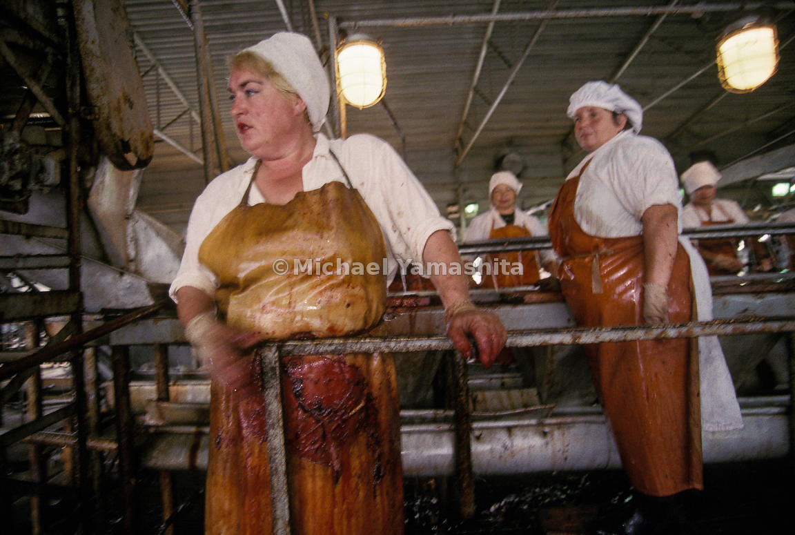 Town Fish Factory in Yazhno, Kurilsk