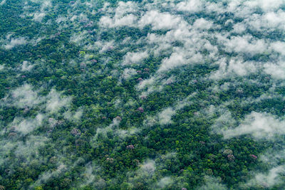 Aerial view the Indio-Maiz Biosphere Reserve - lowland tropical rainforest in Southeastern Nicaragua. August 2016