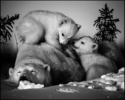 Impossible sleeping, Manitoba Canada 2016 © Laurent Baheux