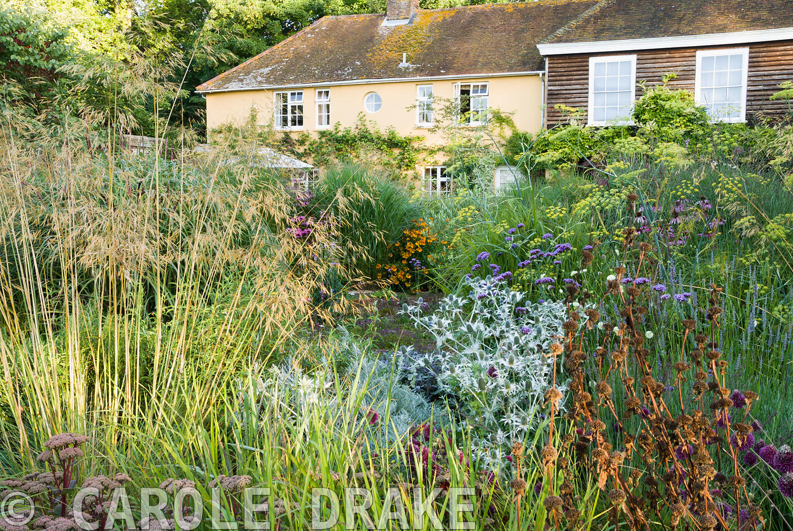 Central circular bed planted with a combination of grasses and herbaceous perennials including Stipa gigantea, Verbena bonari...