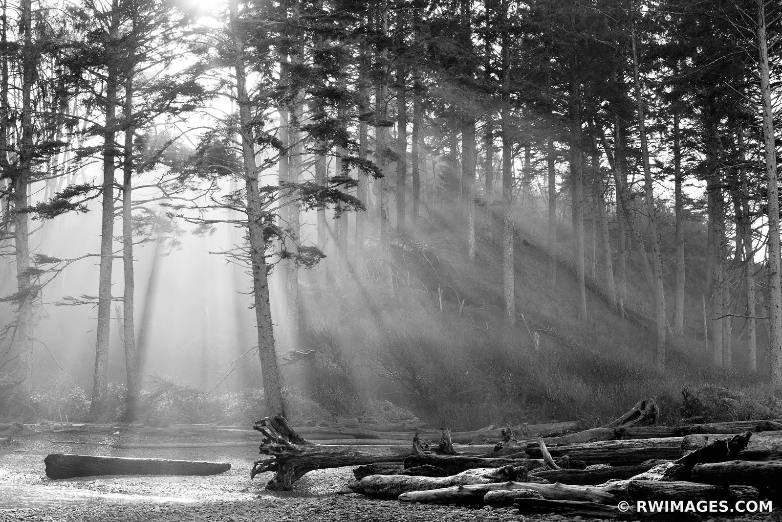 SUNRISE COASTAL FOREST OLYMPIC NATIONAL PARK WASHINGTON PACIFIC NORTHWEST BLACK AND WHITE HORIZONTAL