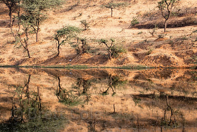 Desert hills reflect in a small lake near Pushkar, Rajasthan, India.