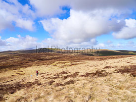 A hiker walking towards Miller Moss from Great Lingy in the Caldbeck Fells in the English Lake District, UK.
