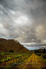 Rows of vines in a vineyard next to a farm track, below a mountain under a stormy, cloud-filled sky.