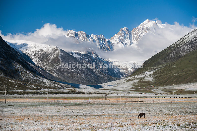 A lone horse grazes on land near the mountain pass west of the nomad town of Manigango, where the Tea Horse Road split into i...
