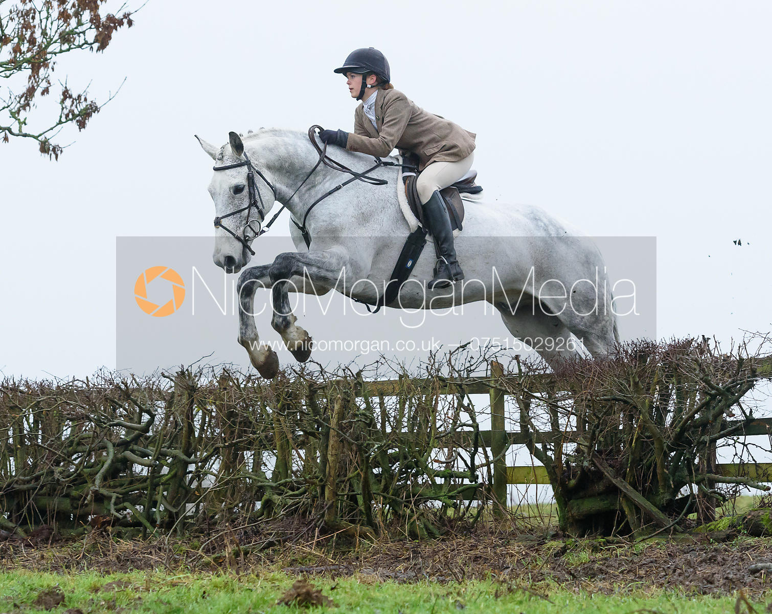 jumping a hedge above Withcote