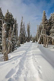 Snowshoe trail through a subalpine forest after a snowstorm on Hurricane Ridge, Olympic National Park, Olympic Peninsula, Was...
