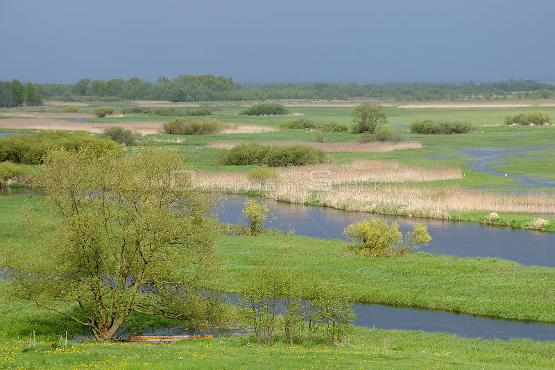 Overview of Biebrza marsh in spring, Poland