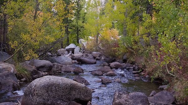 Medium Shot: Standing Over A Wooded Mountain Creek At The Beginning Of Fall