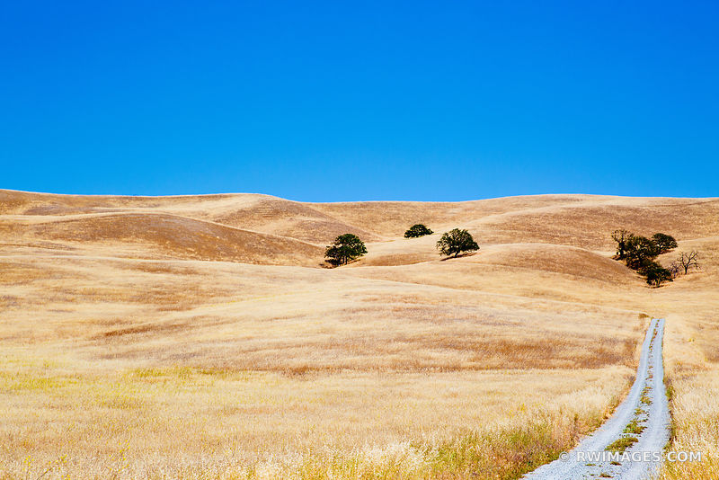 GOLDEN HILLS CENTRAL CALIFORNIA WINE COUNTRY
