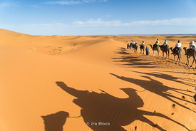 Shadows of camels in the sand dunes in the Erg Chebbi in southeastern Morocco.
