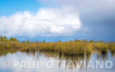Sauvie Island Landscape 1 | Paul Ottaviano Photography