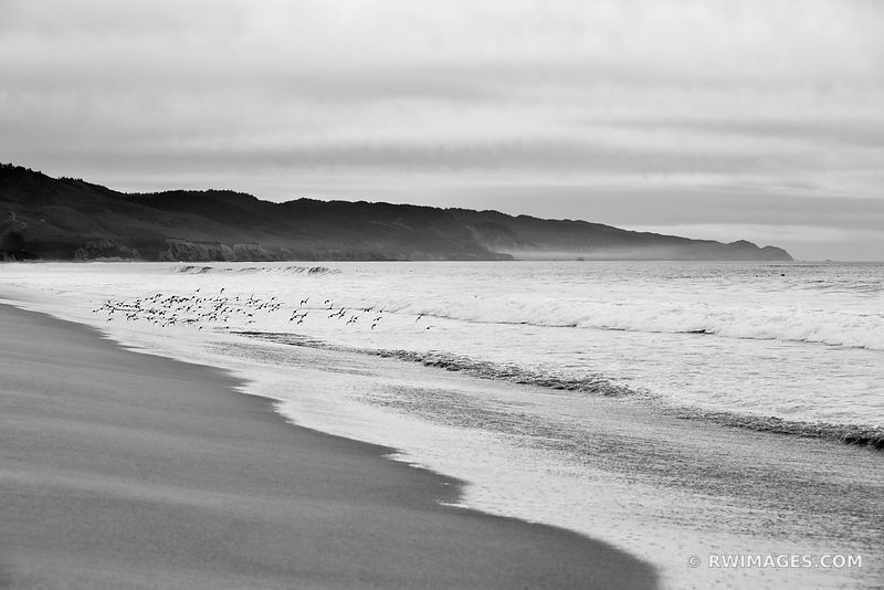 LIMANTOUR BEACH POINT REYES NATIONAL SEASHORE CALIFORNIA BLACK AND WHITE