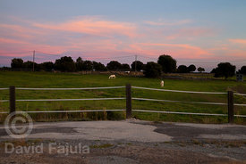 Horses (Equus caballus) under the Autumn sunset